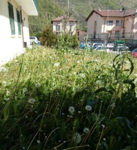ERBA ALTA BALLABIO ORTO COMUNALE (2)