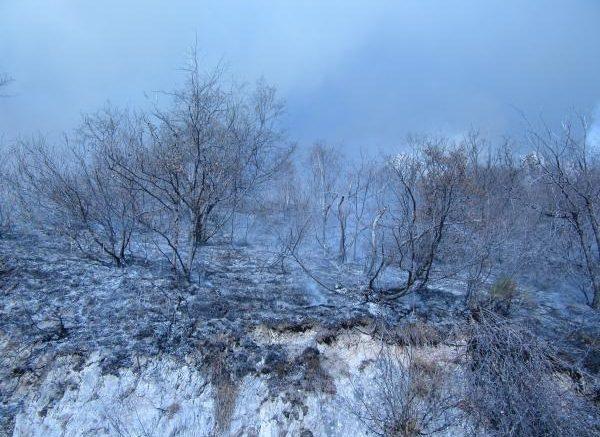 incendio-x-morterone-devastazione1-600x450