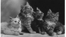 quattro-gatti