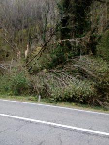alberi caduti cavi enel ballabio