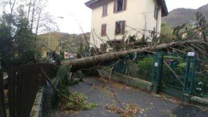 via padre dante albero abbattuto dal vento su recinzione casa