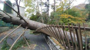 via padre dante albero caduto per il vento su recinzione