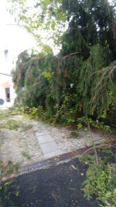 via padre dante albero caduto vento tromba d'aria ballabio