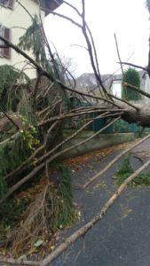 via padre dante ballabio albero caduto su cancello casa vento aria tromba