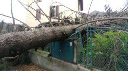 via padre dante ballabio albero caduto su recinzione casa per vento