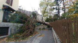 via padre dante ballabio albero caduto su recinzione divelto dal vento