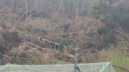 Crollo bosco ballabio sopralluogo (6)