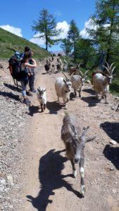 alpinismo giovanile CAI Ballabio alta valle (7)