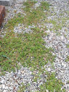 Cimitero Ballabio Inferiore parte vecchia (2)