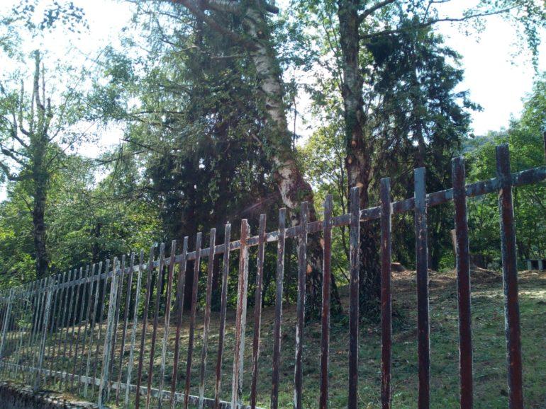 Immagini taglio alberi secolari in ville Ballabio 2019 2
