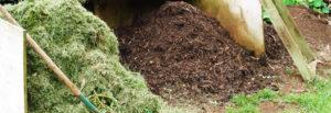smaltimento rifiuti verde giardinaggio