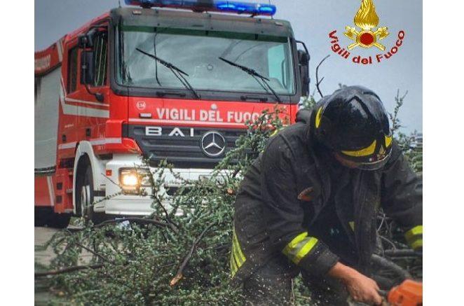 vigili del fuoco intervento pianta malrtempo - Copia