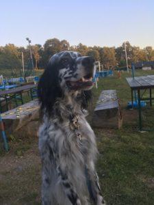 Pino - cane scappato Due Mani (1)