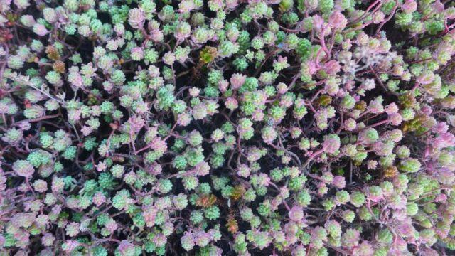 bonus-verde-piante-vegetazione--640x360