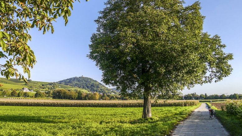 tree-free-standing-3577115_960_720